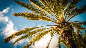 Palm Royalty-vrije Stock Foto