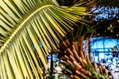 Palm Royalty-vrije Stock Foto's