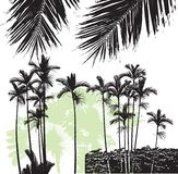 Palm. Silhouette palm illustration. Easy use any color Stock Photography