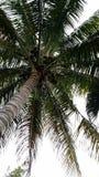palm Royalty-vrije Stock Foto
