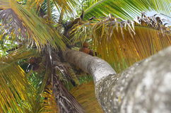 palm Royaltyfri Foto
