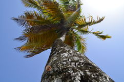 palm Royaltyfria Foton