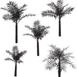 Palm. Silhouette palm illustration. Made by 3d application Royalty Free Stock Photo
