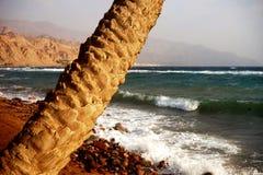 palm Arkivbild