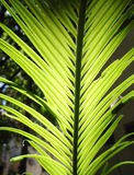 Palm. Leaves backlit with shadows Stock Photos