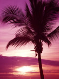 Palm. Tree sunset Royalty Free Stock Image