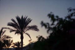 palm royaltyfria foton