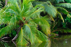 palm Arkivfoton