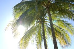 Palm Stock Foto
