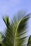 Palm Royalty Free Stock Image