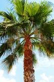 palm Royaltyfria Bilder