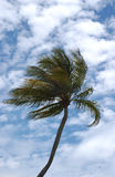 Palm. In the sky royalty free stock image