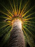palm Royaltyfria Bilder