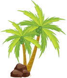 Palm Royalty Free Stock Photography