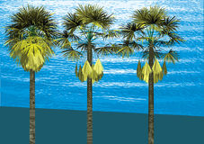 Palm. Tropical palm trees illustration. Composition Stock Photo