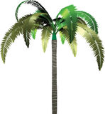 Palm. Tropical palm tree illustration. Isolated Royalty Free Stock Images