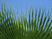 Palm. Leaves stock images