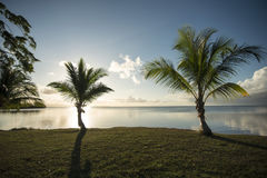 palm Arkivfoto
