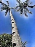 Palm aan hemel Stock Foto