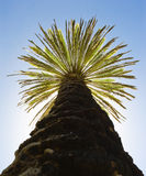Palm against the blue sky Royalty Free Stock Photos