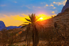 Palm against mountains Royalty Free Stock Photo