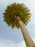 Palm against pretty blue sky Royalty Free Stock Photo