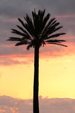 Palm against sunset sky Royalty Free Stock Images
