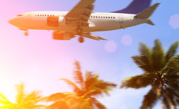 Palm and airplane Royalty Free Stock Photography