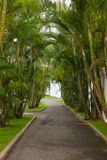 Palm alley Royalty Free Stock Image