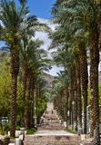 Palm alley Royalty Free Stock Images