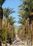 Palm alley in a new district of Eilat city, Israel Royalty Free Stock Photos
