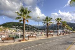Palm alley in Port Soller, Mallorca, Balearic islands, Spain Stock Images