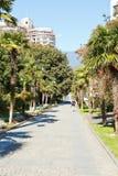Palm alley in Primorskiy Park inYalta, Crimea Stock Photography