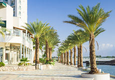 Palm alley on promenade of Elat Royalty Free Stock Photo