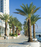 Palm alley on promenade of Elat Royalty Free Stock Images