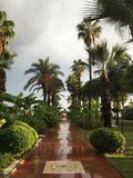 Palm alley after the September rain royalty free stock photos