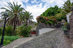 Palm alley with stony road at Masca town on Tenerife island, Spain Stock Photo