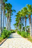 Palm alley to the ocean Royalty Free Stock Images