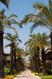 Palm Alley in tropical hotel Stock Photo