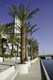 Palm alley and view on resort hotels, Eilat Royalty Free Stock Photo