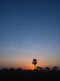 The Palm Alone. In The Rice Field Royalty Free Stock Image