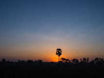 The Palm Alone. In The Rice Field Stock Photos