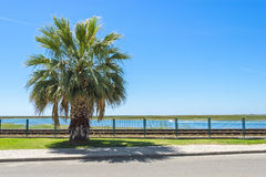 Palm along the street and railways, Faro, Portugal Stock Image