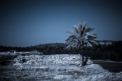 Palm in Armageddon, Israel Royalty Free Stock Images