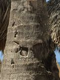 Palm Art. Crack and nuances in a Palm tree Stock Image