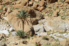 Palm in Atlas mountains Royalty Free Stock Image