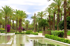 Palm Avenue and Fountain Royalty Free Stock Photo