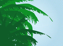 Palm background. Vector illustration of palm background Royalty Free Stock Images
