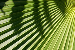 Palm Background Stock Image