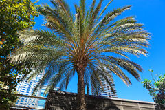 Palm on a background of city Stock Photo